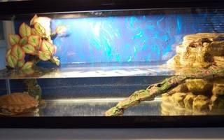 Дизайн аквариума для черепашки