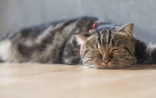 Как приучить немолодого кота к новому дому