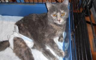 Уретрит у кошек симптомы и лечение воспаления