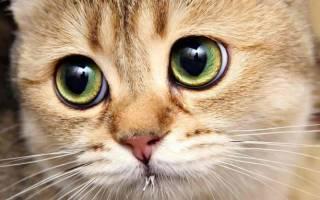 Рахит у котят признаки и лечение заболевания
