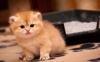 Массаж для кошек и котов во время запора