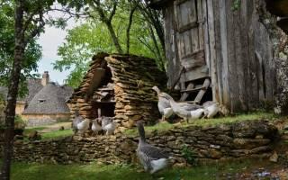 Содержание взрослых гусей — Дачный совет