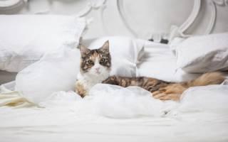 Почему кот ходит в туалет на кровать