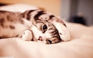 Сотрясение мозга у кошек симптомы и лечение