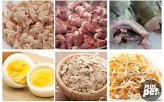 Как выбрать корм для сиамских кошек