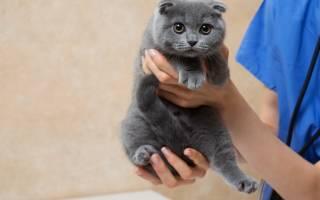 Как отучить кота метить на дверь?