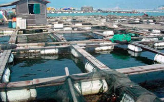 Как осуществляется разведение рыбы в садках