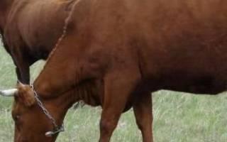 Масти коров продуктивность коров разной масти