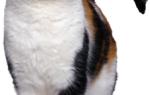 Гуляющая кошка меры предосторожности