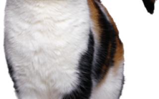 Какими болезнями можно заразиться от кошки