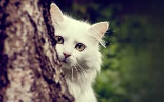 Различают ли кошки цвета и если да то какие