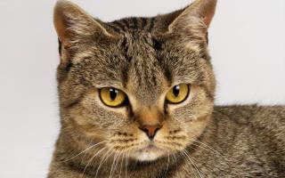Стерилизация кошек необходимость или вред