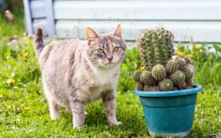 Что делать если у беременной кошки глисты