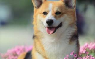 Самые красивые имена для собачек-девочек