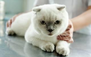 Химическая кастрация котов плюсы и минусы