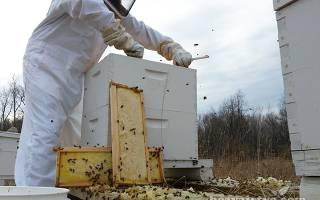 Условия содержания пчел в ульях Рута