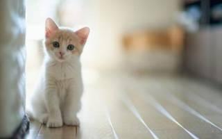 Какой наполнитель для кошек лучше выбрать