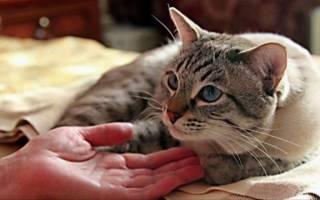 Что делать если у кота недержание мочи?