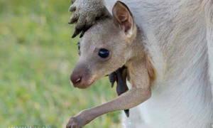 Сумчатые животные — Удивительный Мир Животных
