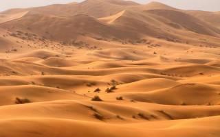Жизнь флоры и фауны в пустыне Сахара