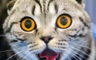 Почему у кота или кошки текут слюни изо рта