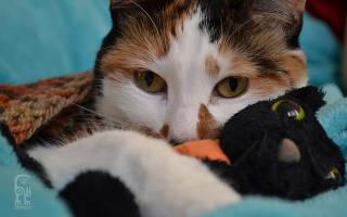 Чем кошка может заразиться от человека