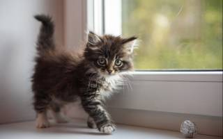Почему повышены эозинофилы у кошки: причины