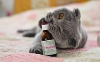 Что будет, если коту дать валерьянку?