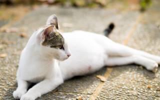 Изменение поведения кошки перед родами