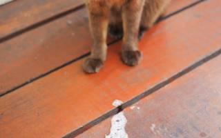 У кота пена изо рта и судороги что делать