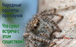 Что делать если домой заполз зеленый паук