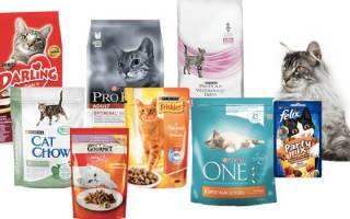 Как выбрать сухой корм для кошек