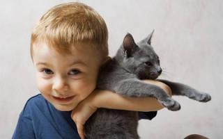Ребенок проявляет агрессию к котенку