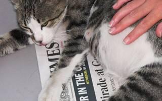 Что делать если у кошки Токсикоз