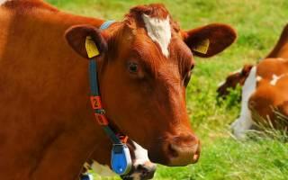 Виды кормов для крс (крупного рогатого скота)