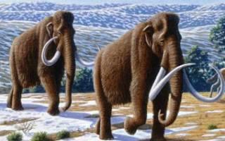Далекие предки и родина слонов
