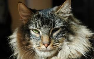 Как меняется характер кота после кастрации