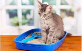 Как давать коту вазелиновое масло при запоре?