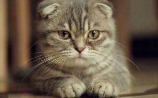 Остеопороз уменьшение костной массы у кошек