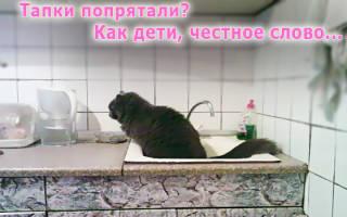 Кот гадит мимо лотка что с этим делать