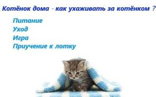 Как ухаживать за котнком в домашних условиях