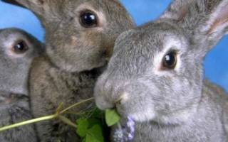 Как ухаживать за кроликами игры с кроликами