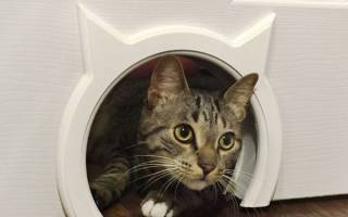 Как сделать дверь для кошки своими руками