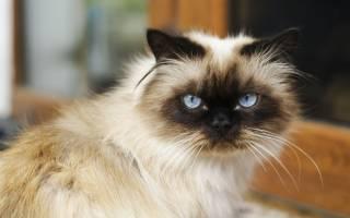 Причины почему у кота текут слюни изо рта
