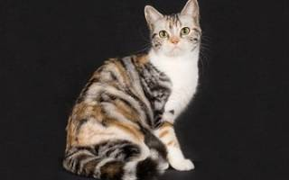 Необычные породы кошек их характеристики