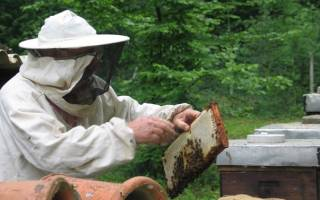 Рациональные методы содержания пчел