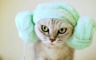 Гигиена кошек в домашних условиях