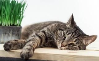 Кошка хрипит слышны хрипы