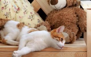 Отек лапы у кота: причины и что делать