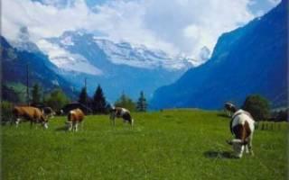 Курсовая работа: Нагул крупного рогатого скота